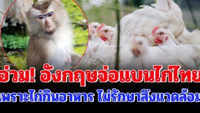 Photo of อ่วม! อังกฤษจ่อเเบนเนื้อไก่ไทย เพราะกินอาหารไม่รักษาสิ่งแวดล้อม