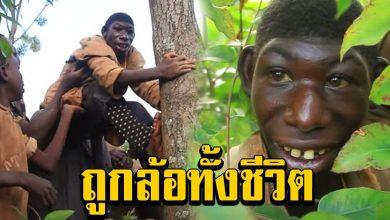 Photo of เมาคลีชีวิตจริง กินกล้วย-หญ้า ป่วยทำเข้าสังคมไม่ได้